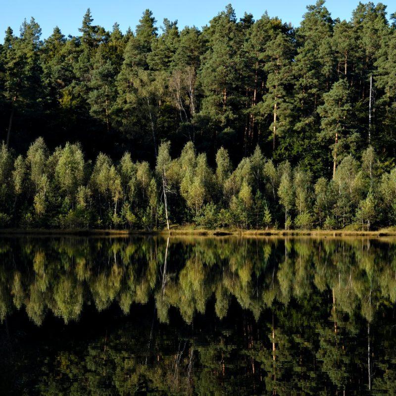 Man sah den Wald vor lauter Bäumen nicht