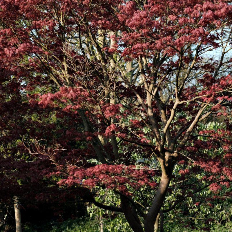 Colours of Cambridge